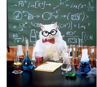 http://www.pro100funny.narod.ru/art03/cat01.jpg
